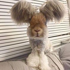 кролик-очаровашка