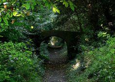Greyfriars Woods