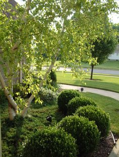 Spring is has finally arrived! Here's a few spring lawn care tips to have a healthy yard. Call John Moore today to and ask about our tips for your lawn.