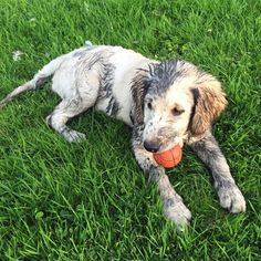 This playful pupper who knows getting dirty is just part of life. | 19 Muddy Puppies Who Are Impossible To Get Mad At