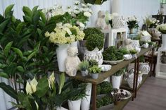 Seasonal Decor, Seasons, Plants, Seasons Of The Year, Plant, Planets