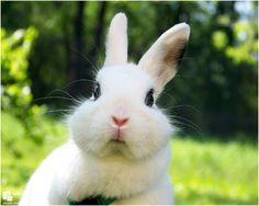 That is one surprised bunny! #bunny #rabbit