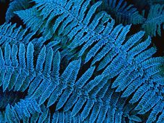 Frost covers the brilliant blue leaves of lush ferns in New Zealand's Fiordland National Park. The park is an isolated wilderness that's home to more than 700 plants found nowhere else in the world.