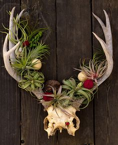 Thistle and Bone-uncommon floral and botanic design