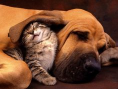 Cute animals that know what Love is 1