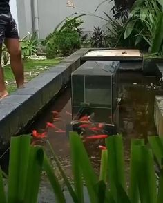 Koi inspiration pond tower Garden Pond Design, Backyard Pool Designs, Ponds Backyard, Backyard Plants, Fish Pond Gardens, Koi Fish Pond, Fish Ponds, Fish Tower, Modern Pond