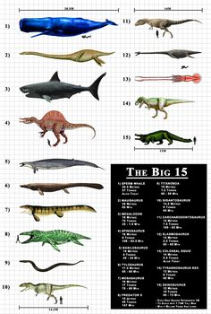 The fifteen largest known active predators, extinct or alive.