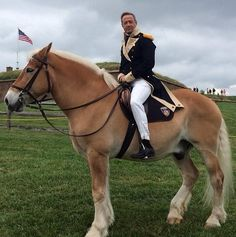 In conclusion, I want to be that horse. We Need To Talk About Martin O'Malley Martin O'malley, Palomino, We Need, Handsome, Horses, Politicians, Animals, Twitter, Animales