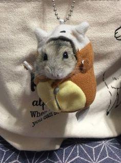 Un hamster dans son sac de couchage