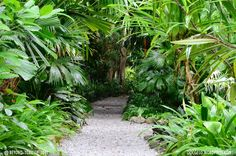 courtyard tropical garden - Google Search
