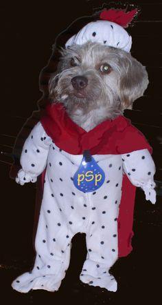 Spot the Super Perilous pet at Halloween . . .