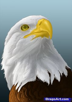 how to draw eagles, draw bald eagles