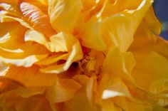 Hibiscus by Eugenio Mondejar on 500px