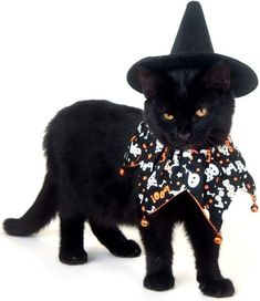Kitten Halloween Costumes, Pet Costumes, Dog Halloween, Happy Halloween, Ghost Costumes, Halloween Night, Halloween Stuff, Halloween Halloween, Vintage Halloween