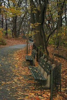 Central Park, NYC by Turkinator, via Flickr