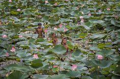 Photograph Lotus Pond !!! by Mahesh Balasubramanian on 500px