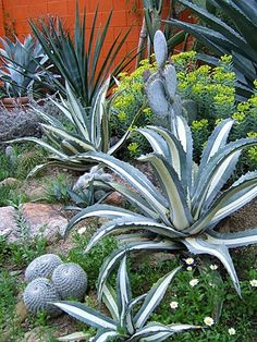 Desert Landscaping Tips This web site has excellent advice on types of desert plants and how to arrange them in an attractive setting. Succulent Landscaping, Landscaping With Rocks, Landscaping Plants, Landscaping Ideas, Landscaping Software, Dessert Landscaping, Arizona Landscaping, Cacti And Succulents, Planting Succulents
