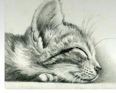 Descanso gato tranquilidad