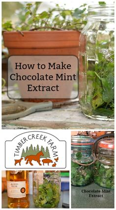How to Make Chocolate Mint Extract - Timber Creek Farm Mint Recipes, Herb Recipes, Water Recipes, Vegan Recipes, Chocolate Mint Plant, Chocolate Mint Tea Recipe, Herbal Remedies, Natural Remedies, Chocolate Extract