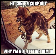 He can\'t figure out why I\'m not letting him in. #animals #cat #snake #funny #nope #relatable