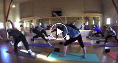 Praticam Aula De Yoga Com Gatos Abandonados Para Incentivar Adopção http://www.funco.biz/praticam-aula-yoga-gatos-abandonados-incentivar-adopcao/
