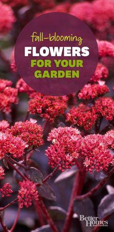 Fill your garden with beautiful fall-blooming plants: www.bhg.com/gardening/flowers/perennials/fall-garden-plants/