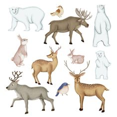 Find Hand-drawn wild animal set stock vectors and royalty free photos in HD. Explore millions of stock photos, images, illustrations, and vectors in the Shutterstock creative collection. Animal Sketches, Animal Drawings, Deer Cartoon, Different Types Of Animals, Geometric Deer, White Polar Bear, Animal Doodles, Cute Wild Animals, Bear Illustration