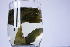 Woda laurowa DIY na problemy skórne | Madie