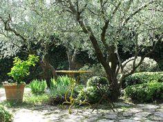 Tips to create a Mediterranean garden