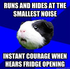 runs and hides at the smallest noise instant courage when hears fridge opening