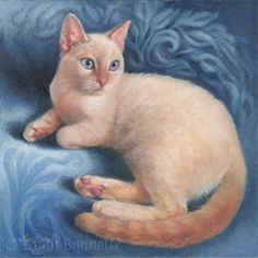 Winter Flame Point Siamese Cat