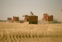 Montana Wheat Harvest....my daddy loved being out there ♥