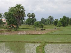 Laos ricefields - Laos - Wikipedia, the free encyclopedia