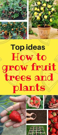 Wanna Enjoy Fruits Grown By Your Own? These Ideas Will Help You, Even Though