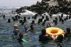 Islas Palomino, conviviendo con sus lobos marinos