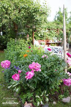 Pionien valloittama juhannus Garden, Plants, Garten, Gardening, Plant, Outdoor, Gardens, Yard, Planting