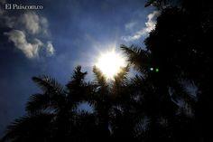 El intenso sol de inicio de año se refleja a través de las palmeras del CAM. Foto Julio Sánchez.