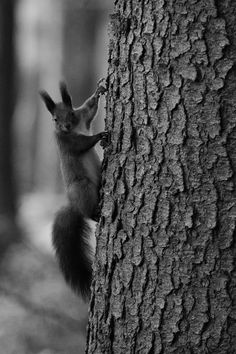 I'm goin' that way! - Tiny squirrel pointing upwards.