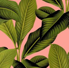 Botanical Palm Fabric - Palm In Palm ~ Pink By Peacoquettedesigns - Tropical Banana Leaf Cotton Fabric By The Yard With Spoonflower door Spoonflower op Etsy https://www.etsy.com/nl/listing/512658405/botanical-palm-fabric-palm-in-palm-pink