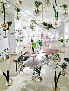 Ultimissime dall'orto: piante sospese per piccoli spazi #indoorplants #hangingplants #hanginggardens #gardening