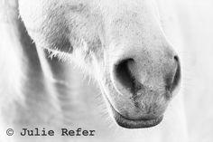 Horse Photography Black and White Horse Minimalist Art