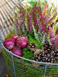 jouw pin, voor tuinennl, fall, autumn decor, dona blogg, kitchen garden, heather, pin voor