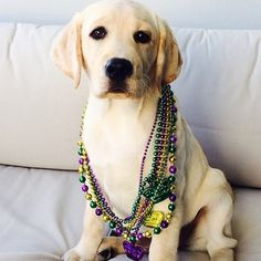 Bibi, keeping it simple and real in her classic beads look. | 21 Dogs In Their Mardi Gras Finest