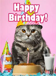 Image Result For Cats On Cards Cat Birthday Wishes Happy Friend