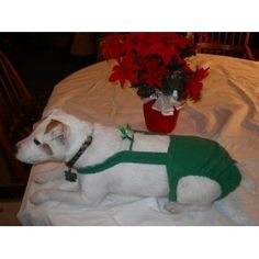 Joybies Green Christmas Piddle Pants for Medium Female Dog (Measuring 15-17 Inches From Collar to Base of Tail) Joybies http://www.amazon.com/dp/B006LF7OPC/ref=cm_sw_r_pi_dp_rgedwb04GS5NG Also available in Male dog ; and unisex for cats !