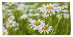 Anna Matveeva.daisies At Sunset.photographers Beach Sheet featuring the photograph Daisies At Sunset by Anna Matveeva   #AnnaMatveeva #daisies #Sunset #FineArtPhotography #ArtForHome #HomeDecor #picnic #BeachSheet #Pixels