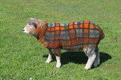 DeltaBluez Stockdogs: Colored Sheep