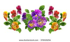 Beautiful colorful pansy floral pattern, three colored violet Viola tricolor, spring flowers, isolated on white background. Digital illustration. Art, print, web, fashion, textile, texture, home decor