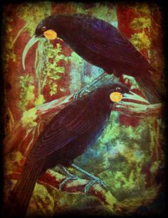 Extinct NZ Huia. Thing 1, Wooden Bird, Dance Art, Extinct, Bird Art, Beautiful Birds, Workouts, Paradise, Feather