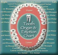 Tooth Extraction Aftercare, Tooth Extraction Healing, Iridology Chart, Meridian Energy, Tooth Chart, Reflexology Massage, Tooth Pain, Wisdom Teeth, Dental Assistant